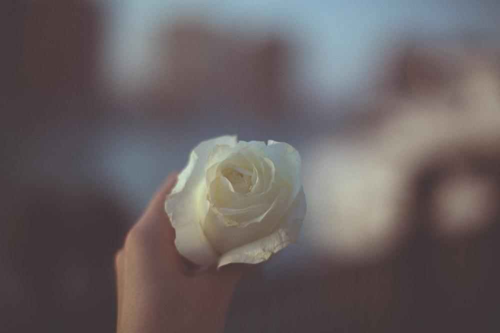 rosa bianca doha qatar