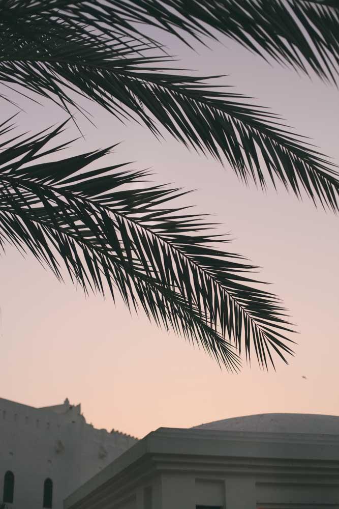 palms doha qatar