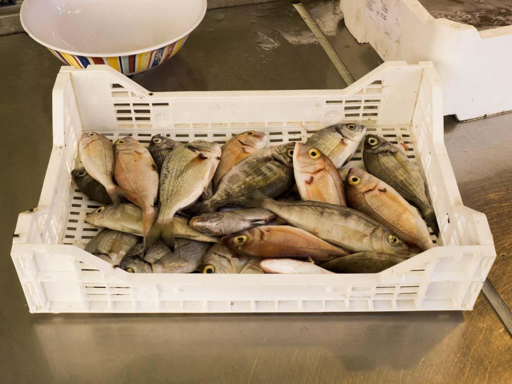 pesce mercato ortigia